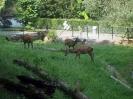 Tiere im Frühling_1