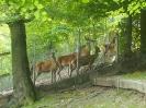 Tiere im Frühling_2
