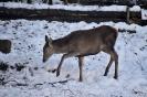 Unser Hirschpark im Winter 2021_3