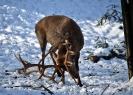 Unser Hirschpark im Winter