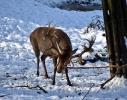 Unser Hirschpark im Winter 2021_7