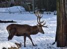 Unser Hirschpark im Winter 2021_8