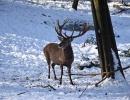 Unser Hirschpark im Winter 2021_9